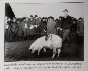 Höstklädda bönder beskådar en stor gris.